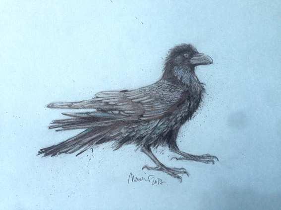 Karen Meunier, Rabe, Zeichnung;